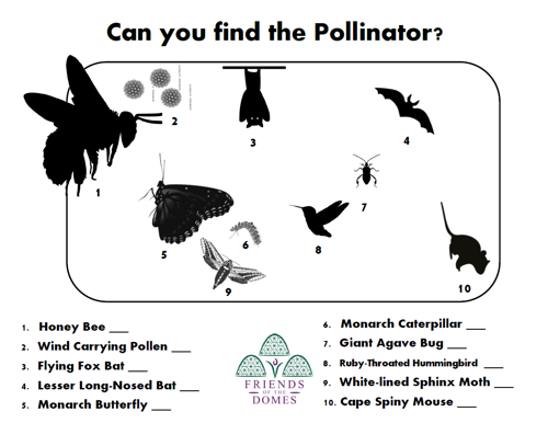 Can you find the Pollinator?