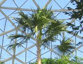 Tropical Dome Trees
